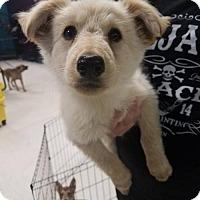 Adopt A Pet :: Sophia - Maple Grove, MN