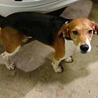 Adopt A Pet :: Jay - Aurora, IL