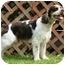 Photo 2 - Springer Spaniel Dog for adoption in Avon, New York - Freckles