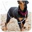 Photo 3 - Rottweiler Dog for adoption in Rexford, New York - Kestle