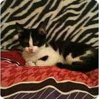 Adopt A Pet :: Jangle - Mobile, AL