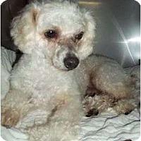 Adopt A Pet :: Micky - Plainfield, CT