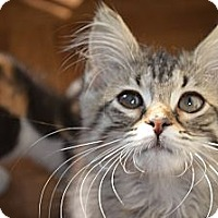 Adopt A Pet :: Wendy - Xenia, OH