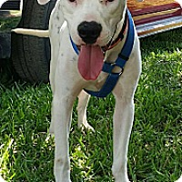 Adopt A Pet :: WRANGLER - hollywood, FL