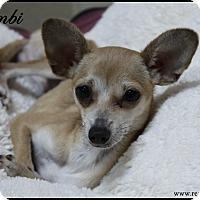 Adopt A Pet :: Bambi - Rockwall, TX