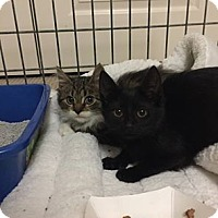 Adopt A Pet :: Wyndemere and Valentin - Chicago, IL