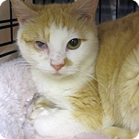 Adopt A Pet :: Macy - Lunenburg, MA