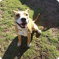 Adopt A Pet :: Miley - Las Cruces, NM