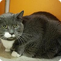 Adopt A Pet :: Spicy - Elyria, OH