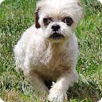 Adopt A Pet :: Winston - Joplin, MO