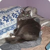 Adopt A Pet :: Bonney - Alpharetta, GA