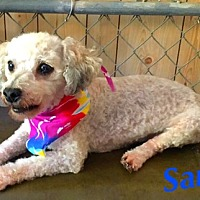 Adopt A Pet :: Sam - Hazard, KY