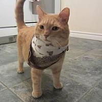 Adopt A Pet :: Sam - Richmond Hill, ON