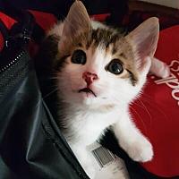 Adopt A Pet :: Maritz - Mississauga, Ontario, ON