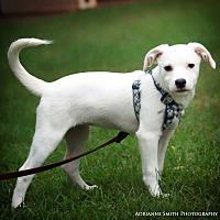 Adopt A Pet :: Haley - Fayetteville, GA