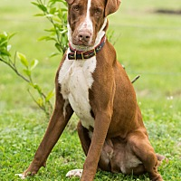 Adopt A Pet :: Clyde - Fort Atkinson, WI