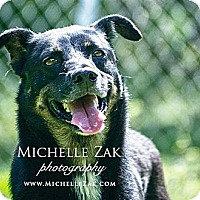Adopt A Pet :: Largo - Miami, FL