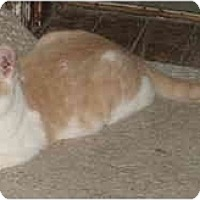 Adopt A Pet :: Ronny - SWEET - Cincinnati, OH