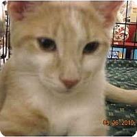 Adopt A Pet :: Butterscotch & Mallow - Riverside, RI