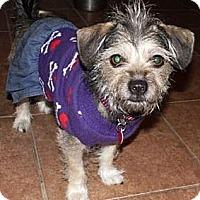 Adopt A Pet :: Selena - Gilbert, AZ