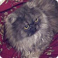Adopt A Pet :: Prince Andrew - Columbus, OH