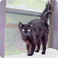 Adopt A Pet :: Jasmine - Quincy, MA