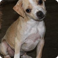 Adopt A Pet :: Mitsy - Torrance, CA
