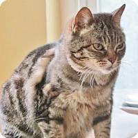 Adopt A Pet :: Amira - Davis, CA