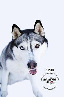 Siberian Husky Dog for adoption in Los Angeles, California - OLIVIA