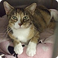Adopt A Pet :: Macaroni - Byron Center, MI