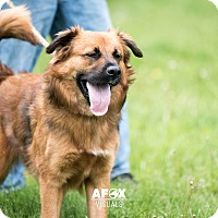 Adopt A Pet :: Grit - Middletown, NY