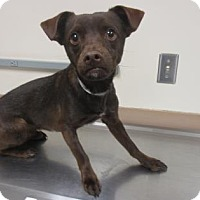 Adopt A Pet :: DANDY - Reno, NV