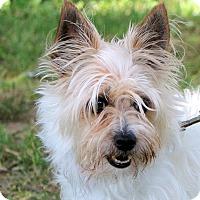 Adopt A Pet :: Chloe~adopted! - Glastonbury, CT