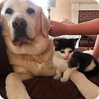 Adopt A Pet :: Sammy - Boston, MA