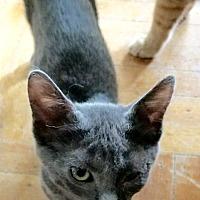 Adopt A Pet :: Princess - Brooklyn, NY