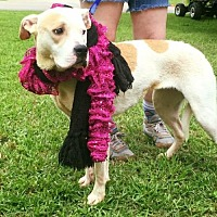 Adopt A Pet :: Ree [NEEDS FOSTER] - Decatur, GA