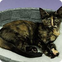 Adopt A Pet :: APPLE - SWEET LITTLE FRUIT! - Plano, TX