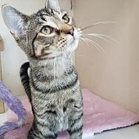 Adopt A Pet :: Desi - Berlin, MD