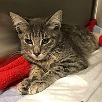 Adopt A Pet :: Groot - Sherman Oaks, CA