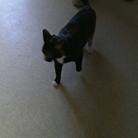 Adopt A Pet :: Gracie - Fayetteville, TN