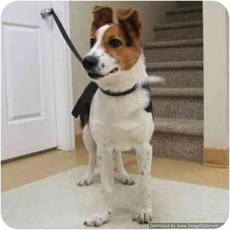 Border Collie Mix Puppy for adoption in Morden, Manitoba - Skipper