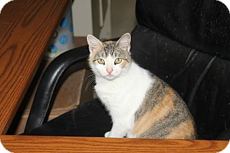 Domestic Shorthair Cat for adoption in North Branford, Connecticut - Jenna