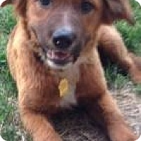 Adopt A Pet :: Rain - Hancock, MI