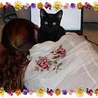 Adopt A Pet :: ROXY - KANSAS, MO