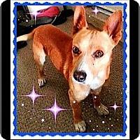 Adopt A Pet :: Gino (Courtesy) - Scottsdale, AZ