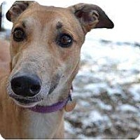 Adopt A Pet :: Boom (Wintaboom) - Chagrin Falls, OH