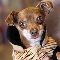 Adopt A Pet :: Ziggy - Pacific Grove, CA