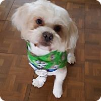 Adopt A Pet :: Willie Nelson - Houston, TX