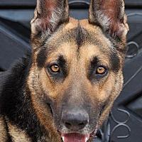 Adopt A Pet :: Alphonse von Altfeld - Los Angeles, CA
