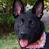 Adopt A Pet :: Oreo - San Ramon, CA
